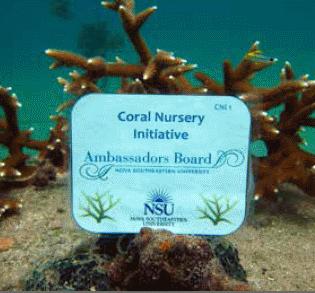 NSU Coral Nursery