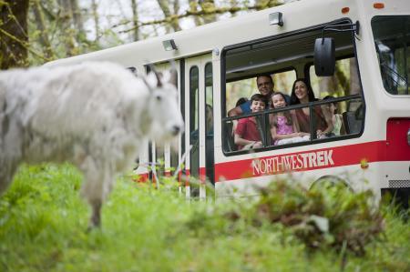 Tram Tour at Northwest Trek Wildlife Park
