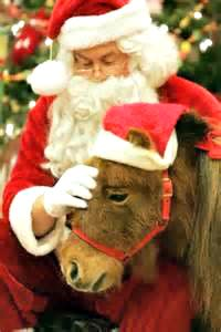 Christmas With the Ponies