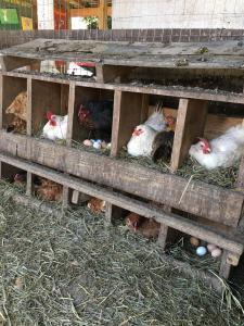 Great Country Farms - Loudoun County, VA