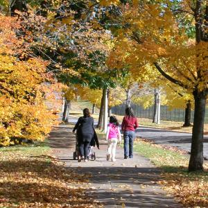 Fall in Highland Park, Rochester, NY