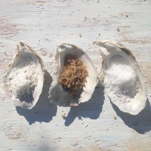 hatteras sea salt