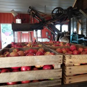 The Kekionga Cider Company produces hard and soft cider. The large apple press can be seen in operation and viewed from the main floor of the bar/restaurant.