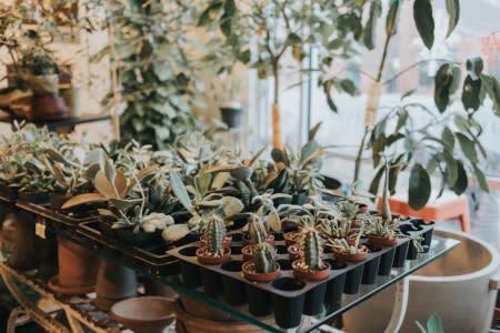 Darling Botanical