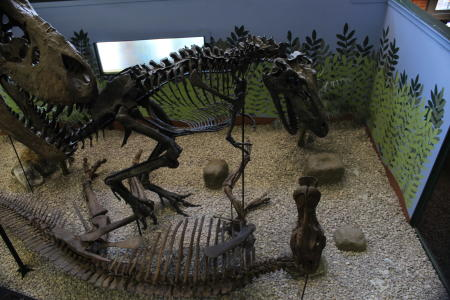 See one of the most complete T. rex in the world at Museum of World Treasures in Wichita KS