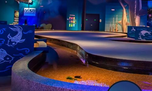 Sting Ray Touch Pool