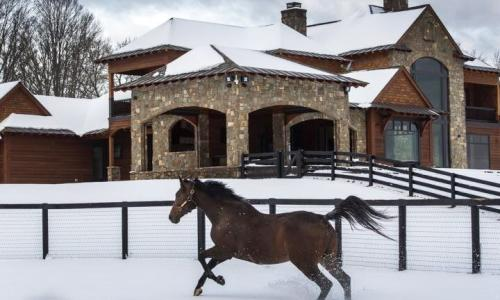 Sugar Plum Farm horse running in the snow