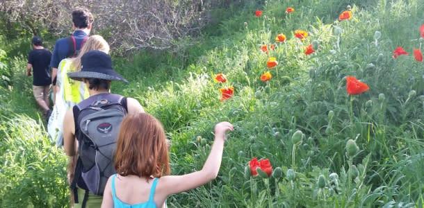McClintock Trail Meadow Music