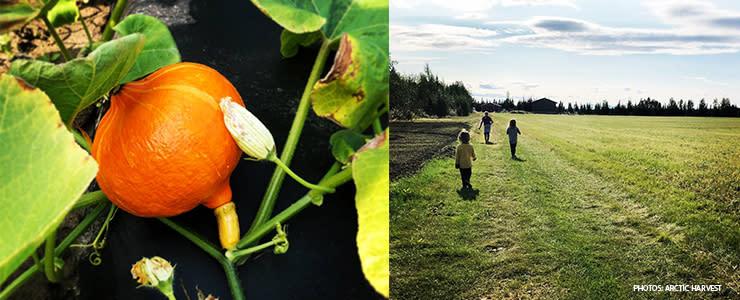 Fall in Fairbanks Alaska