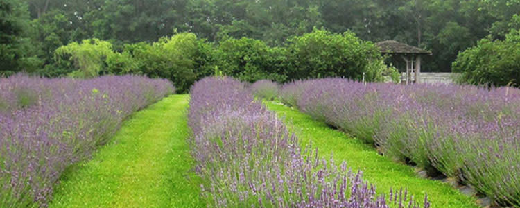 Willowfield in Bloom