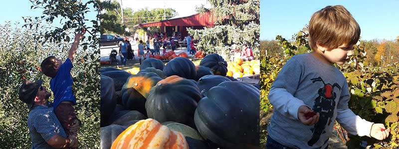 Anderson Orchard