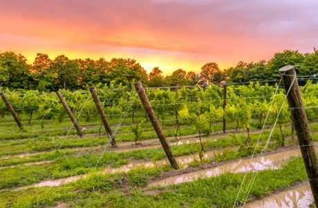 Colloca Winery