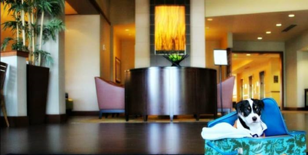 Hyatt Place │ Pet Friendly