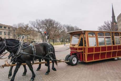 Horse-Drawn Trolley Rides