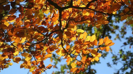 Fall Foliage Train Excursion