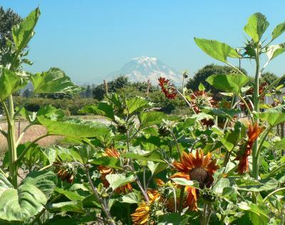 View of Mt. Rainier from Sumner