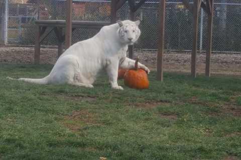 Wild Animal Park Halloween