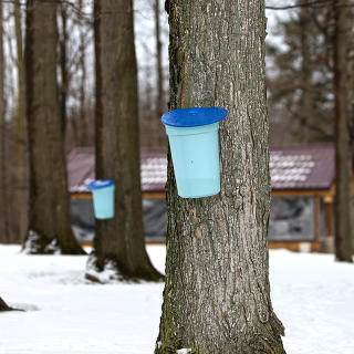 Maple Syrup Weekends