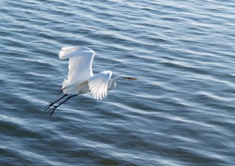 2693P3birdwatching-egret.jpg