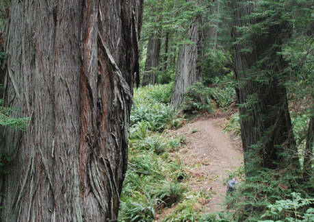 3637P3berry glen trail.jpg