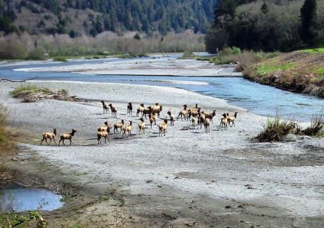 3752P3Redwood Creek from Wikepedia.JPG