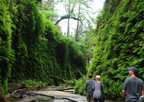 475P3Fern Canyon.jpg