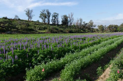 Native Seed Farm in Irvine
