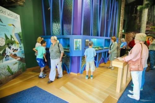 Beaver Creek Discovery Room