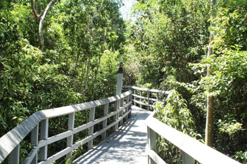 The 247.1-acre urban wilderness of Fern Forest Nature Center contains 30 species of fern. Find a serene setting for a family gathering or special event.