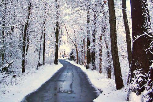 Snowy Day at Fox Island County Park