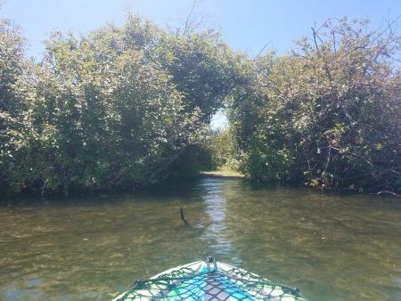 Kayaking in Lakewood