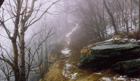 Dry Brook Ridge Trail in fog (C Olney).JPG
