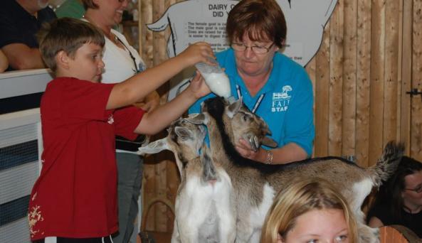 DC Fair - goats