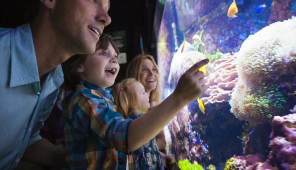 Aquarium of Niagara Family