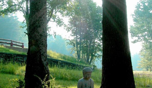 Buddha_two_trees.jpg