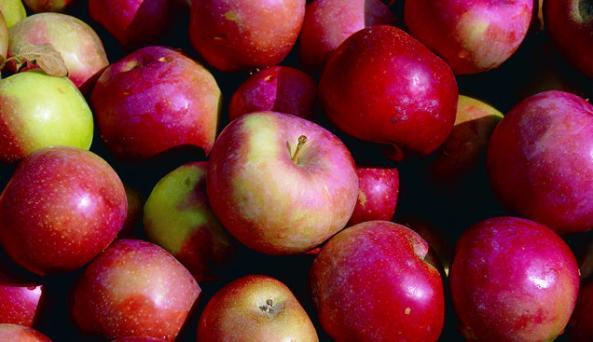 Apples copy.jpg