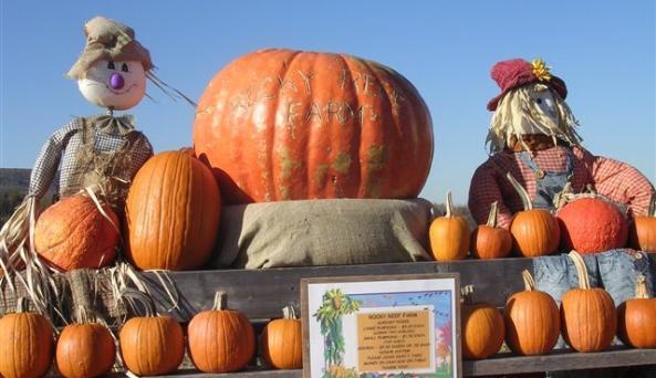 pumpkincloseImg0348.JPG