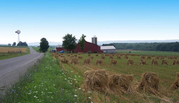 Amish oat field copy.jpg