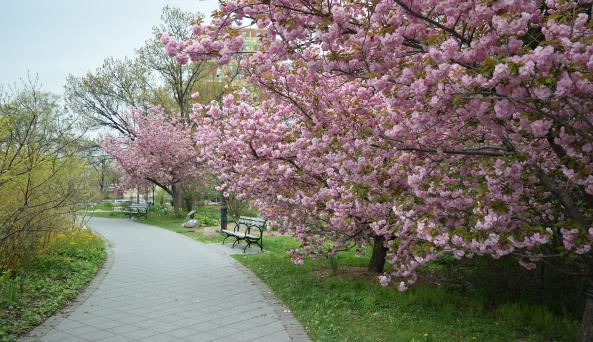 Cherry Circle in Spring by Jess Brey