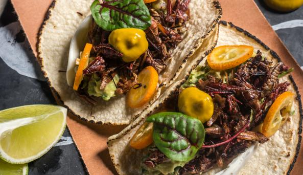 BLACK ANT__Grasshopper Tacos - Photo Courtesy of Paul Wagtouicz