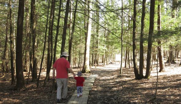 Spencer Crest trail