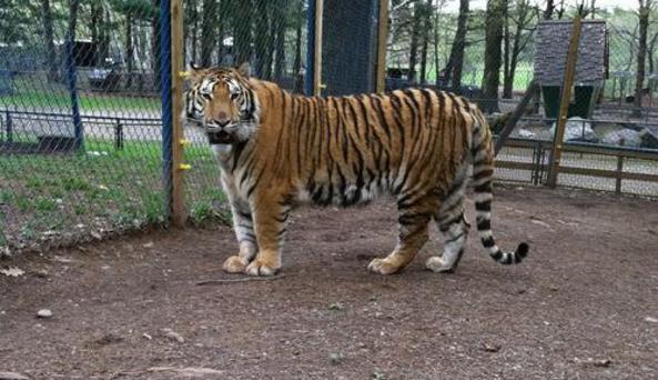 Bailiwick Ranch & Animal Park