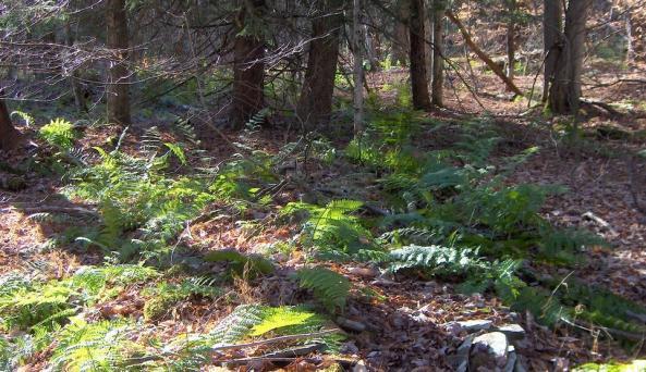 Calhoun Creek State Forest