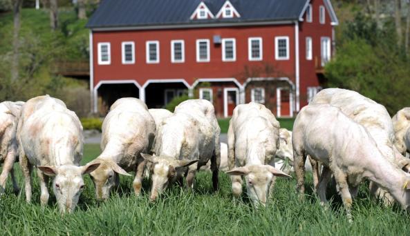 Old Chatham Sheepherding Co.