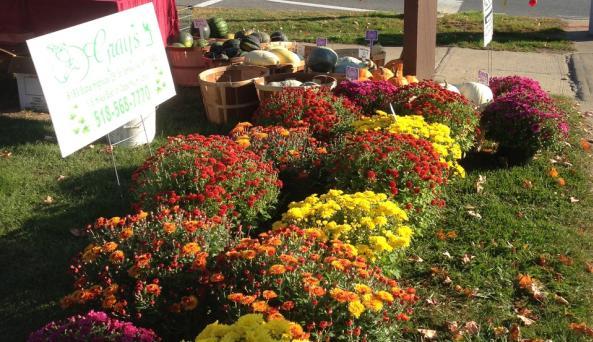 Johnstown Farm Market Mums