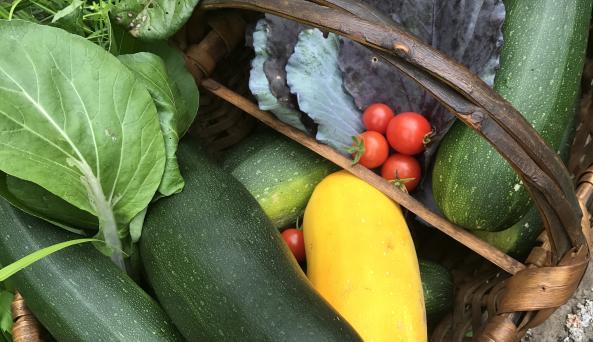 Farm fresh Bounty