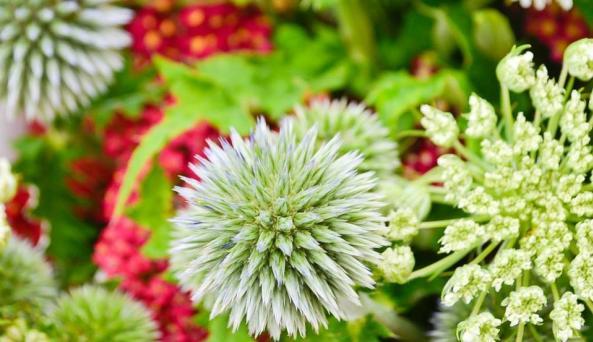Rhinebeck Farmers Market - flowers