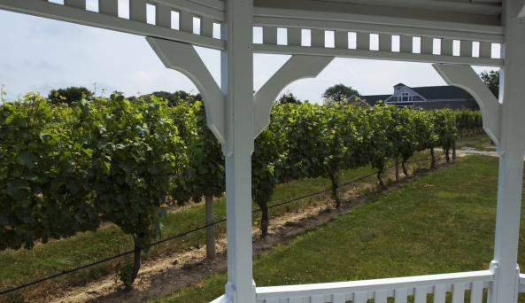 Pellegrini Vineyard