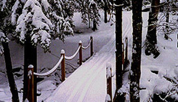 Mtn Trails