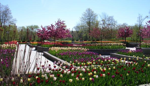 Arboretum - Tulips 2.JPG